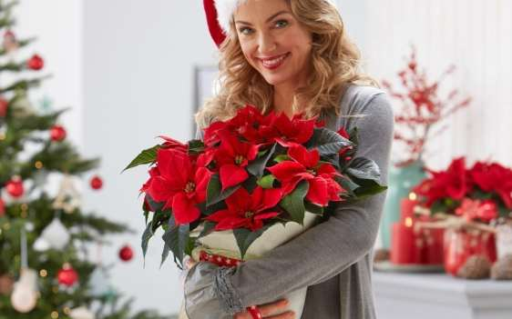 woman-poinsettia-1080x675